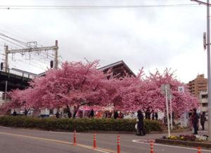 ぽえむ三浦海岸店🌸桜まつりスタートしてます~!